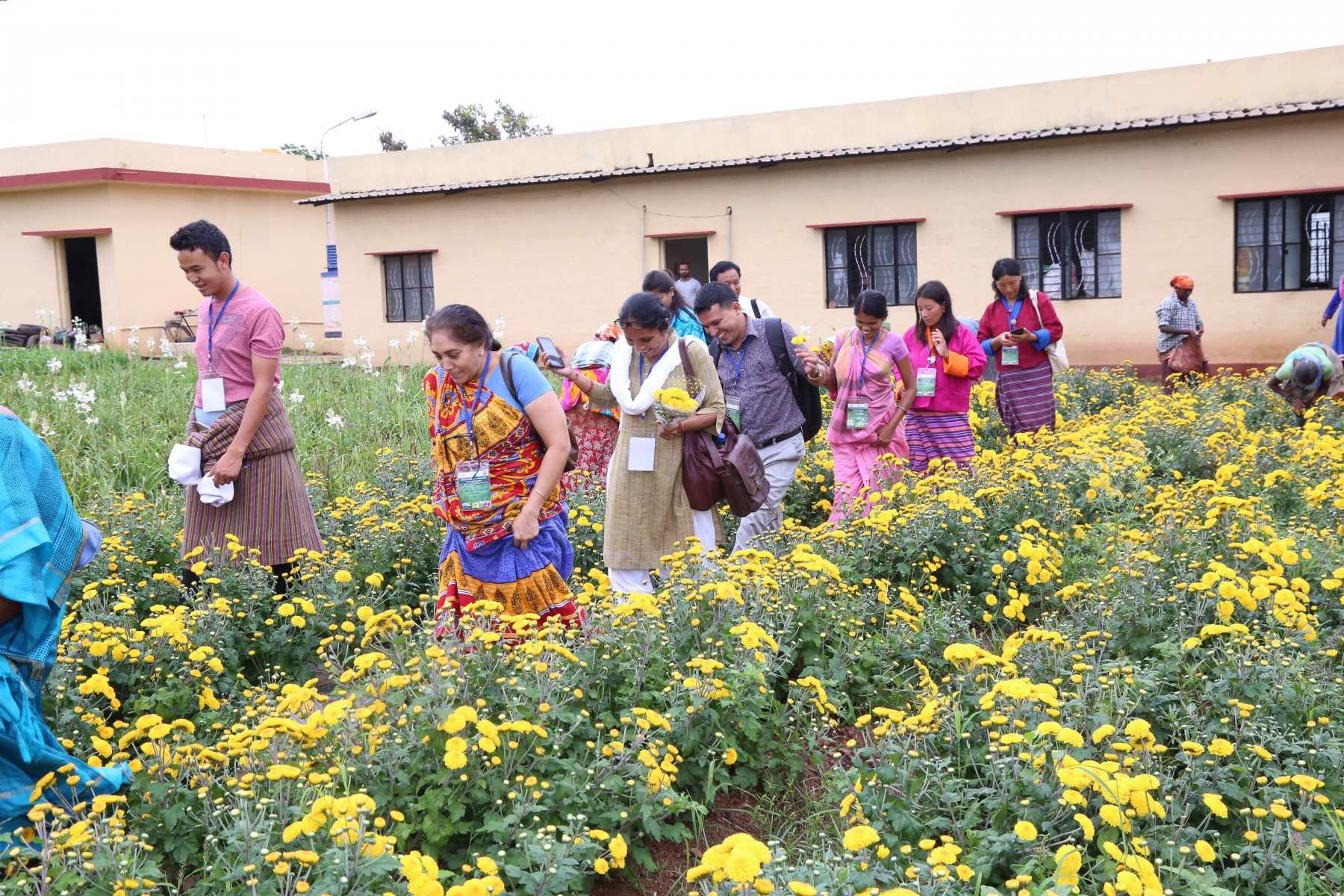 Visit to Hi tech horticulture plots